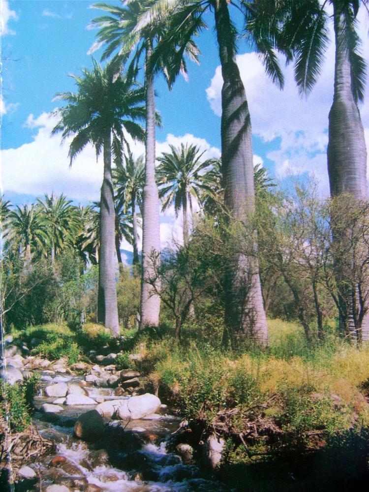 Dos parcelas en reserva ecol gica oasis de la campana tev15506 for Vivero hijuelas
