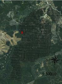 Fotos de arriendo terreno 4 hectareas entre constitucion y for Viveros en talca