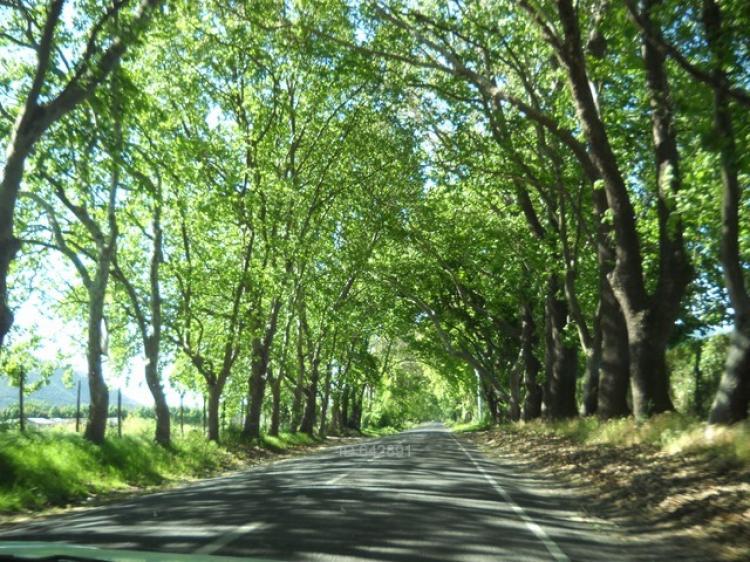 Fotos de dos parcelas en reserva ecol gica oasis de la campana - Fotos de parcelas ...