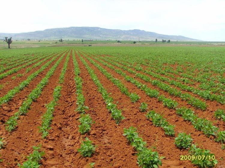 Dos parcelas agr colas de riego de 4 7 y 4 6 hectareas - Fotos de parcelas ...