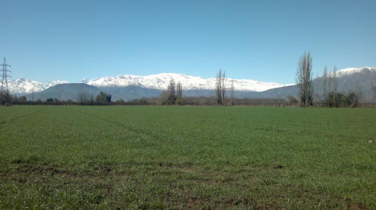 Foto Agricola en Venta en LOS VILLARES, Rinconada, Los Andes - 5 hectareas - AGV16738 - BienesOnLine