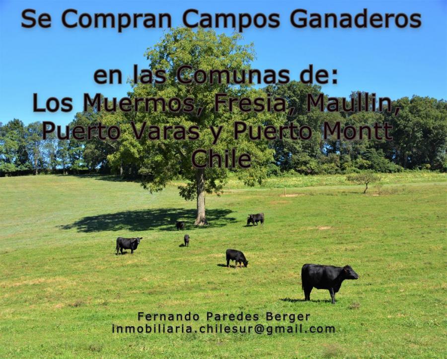 Foto Agricola en Venta en Los Muermos, Fresia, Maullin, Frutillar, Puerto Va, Los Muermos, Llanquihue - AGV89220 - BienesOnLine
