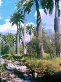 Terreno en Venta en Ocoa Hijuelas
