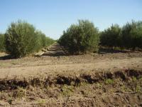 Agricola en Venta en  Santa Bárbara