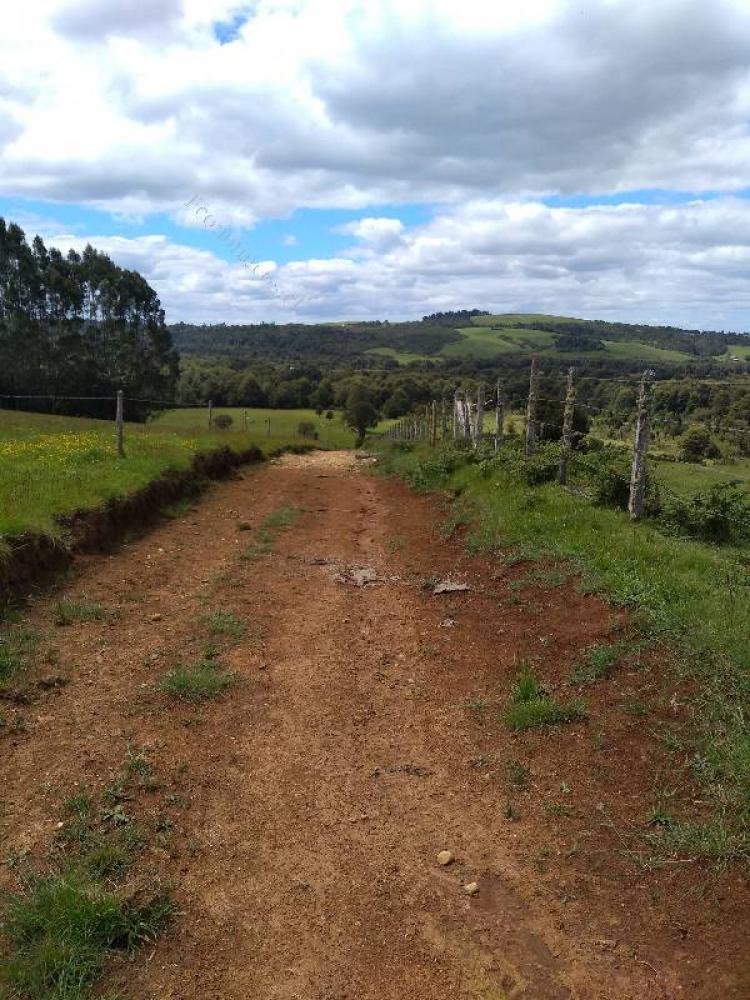 Foto Agricola en Venta en Los Muermos, Los Muermos, Llanquihue - $ 6.000.000 - AGV85170 - BienesOnLine