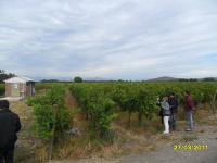 Agricola en Venta en La Higuerilla Sagrada Familia