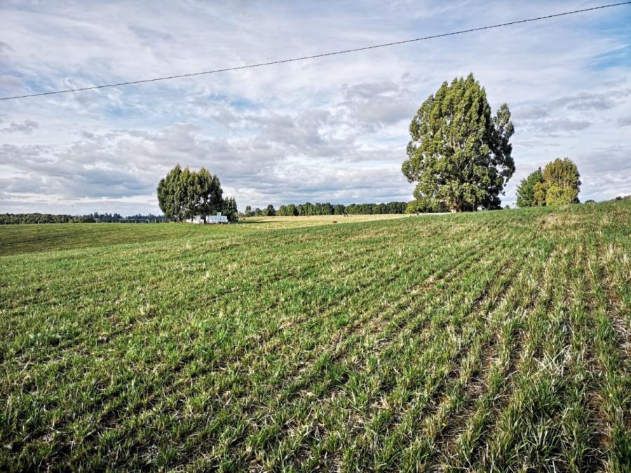 Foto Agricola en Venta en Los Muermos, Los Muermos, Llanquihue - $ 550.000.000 - AGV91201 - BienesOnLine