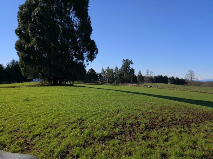 Foto Agricola en Venta en Puerto Montt, Llanquihue - $ 25.000.000 - AGV97973 - BienesOnLine