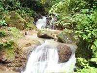 Finca en Venta en La Abundancia San Carlos