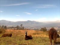 Terreno en Venta en Loma de Monjas Quito