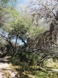 Terreno en Venta en La Cieneguita San Miguel de Allende