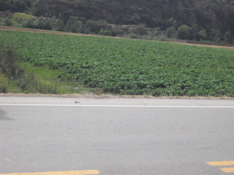 Venta De Terreno Km 11 Carretera Central Huanuco Vichaycoto Lima