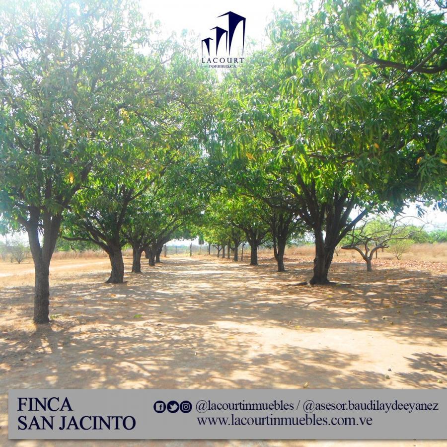 Foto Finca en Venta en Unare, San  Jacinto, Bol�var - 20 hectareas - U$D 80.000 - FIV122894 - BienesOnLine