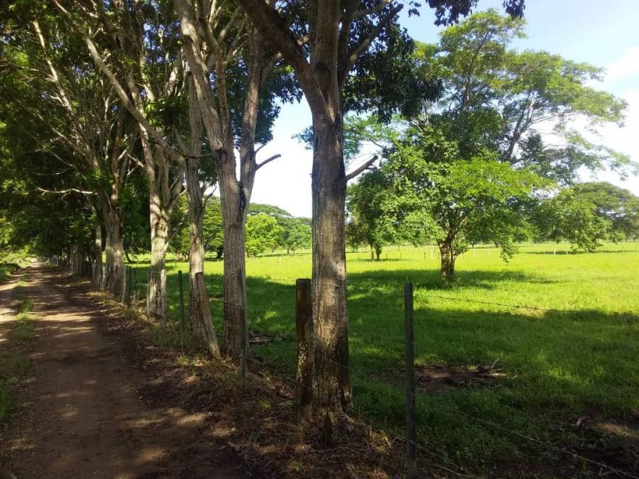 Foto Finca en Venta en Abejales, T�chira - U$D 1.430.000 - FIV141917 - BienesOnLine