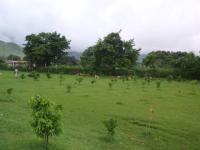 Terreno en Venta en Sector Zuata La Victoria